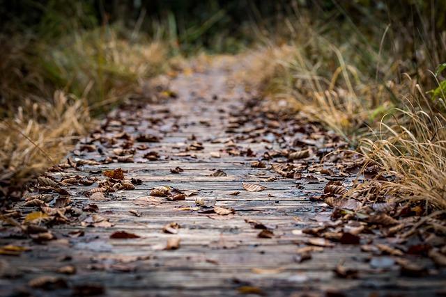 wooden-trail-5738039_640